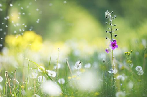 Allergy「Wildflowers background」:スマホ壁紙(15)