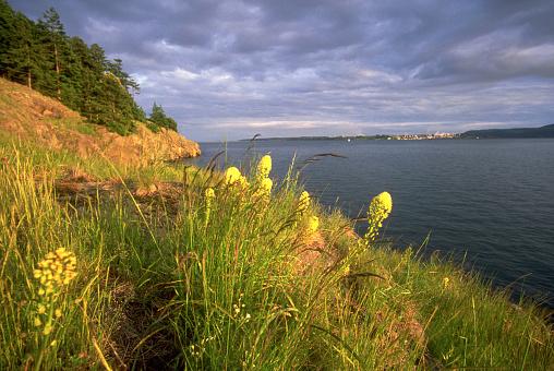 The Nature Conservancy「Wildflowers on Coast of Washington's Hat Island」:スマホ壁紙(13)