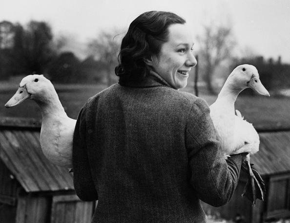 Fred Morley「Aylesbury Ducks」:写真・画像(11)[壁紙.com]