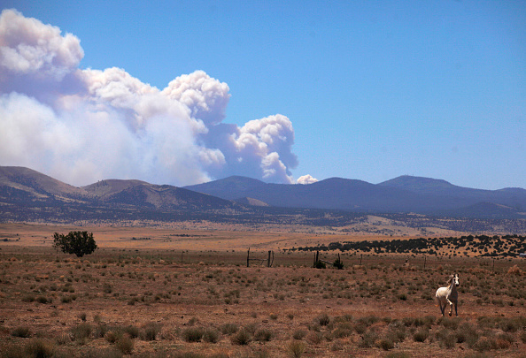 Horse「Massive Arizona Wildfire Spreads, Threatening Nearby Towns」:写真・画像(9)[壁紙.com]