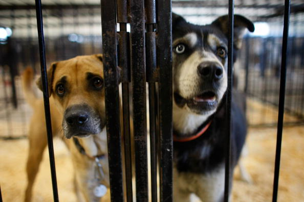Dog「Mississippi River Towns Brace For Major Flooding」:写真・画像(11)[壁紙.com]