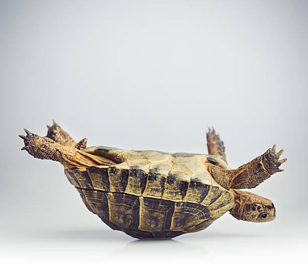 Tortoise upside down:スマホ壁紙(壁紙.com)