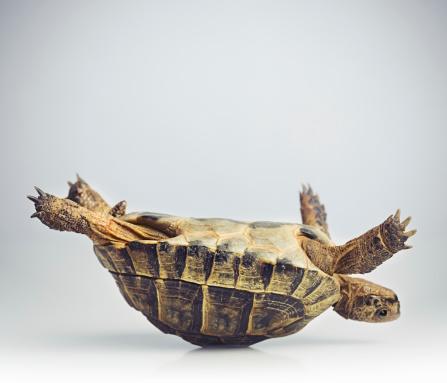 Animal「Tortoise upside down」:スマホ壁紙(0)