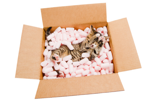子猫「シャイなキトンボックス」:スマホ壁紙(19)