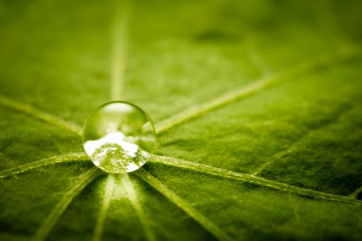 Water Lily「Water drop on green leaf」:スマホ壁紙(4)