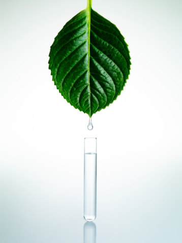 Environmental Conservation「Water drop from Leaf」:スマホ壁紙(6)