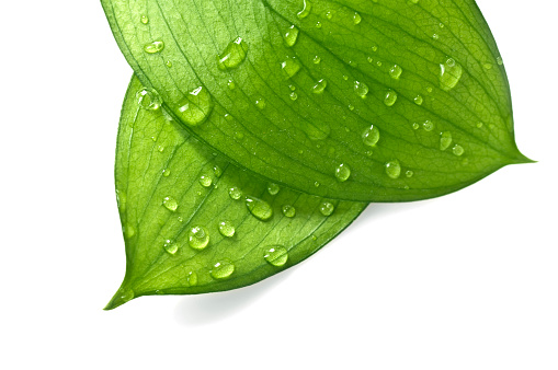 Extreme Close-Up「Water Drop on Leaves」:スマホ壁紙(6)
