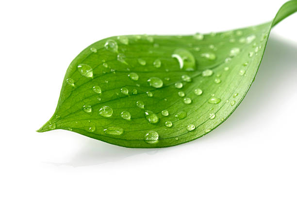 Water Drop on Leaf:スマホ壁紙(壁紙.com)