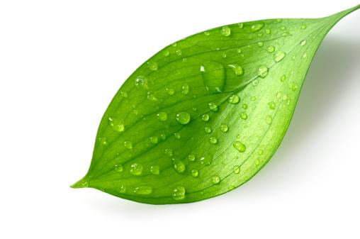 雨「水ドロップの葉」:スマホ壁紙(6)