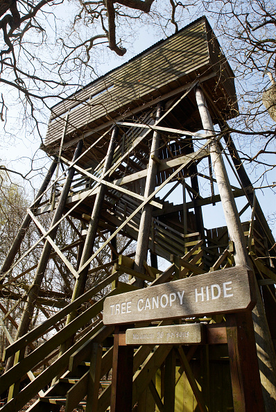 Animal Wildlife「Wildlife watchers canopy hide, National Trust Dunwich Heath, Suffolk, UK」:写真・画像(7)[壁紙.com]