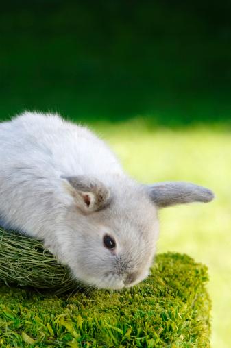 Easter Bunny「Rabbit sitting in nest」:スマホ壁紙(1)