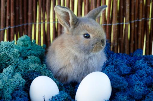 Easter Bunny「Rabbit sitting in nest」:スマホ壁紙(4)