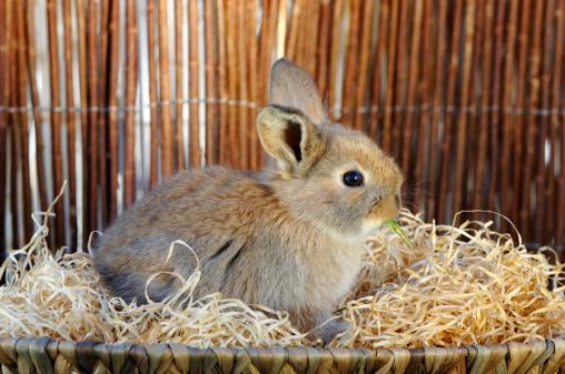 Easter Bunny「Rabbit sitting in nest」:スマホ壁紙(6)