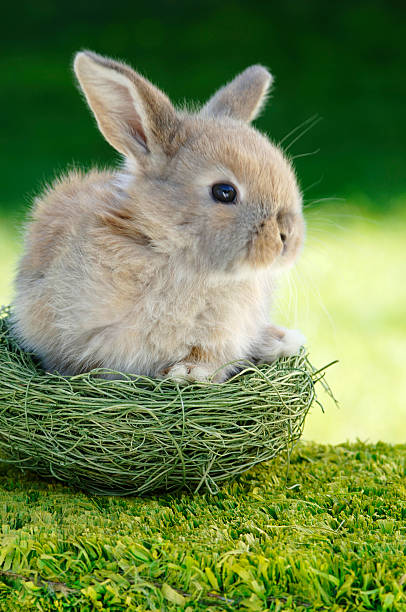 Rabbit sitting in nest, close-up:スマホ壁紙(壁紙.com)