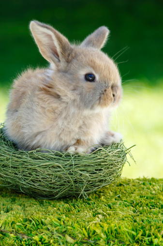 Easter「Rabbit sitting in nest, close-up」:スマホ壁紙(13)