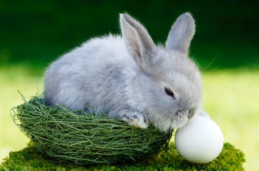 イースター「Rabbit sitting in nest, close-up」:スマホ壁紙(0)