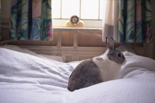 Rabbit「A Rabbit sitting on the Bed, Side View」:スマホ壁紙(11)