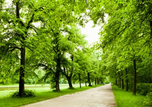 公園「Alley in Nymphenburg Park」:スマホ壁紙(12)