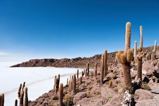 Bolivian Andes「Isla del Pescado on Salar de Uyuni」:スマホ壁紙(11)