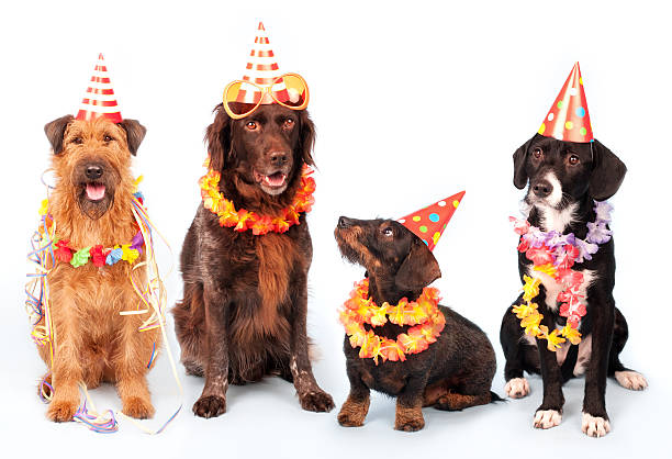 Happy Party Dogs:スマホ壁紙(壁紙.com)