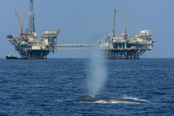 Sea「Endangered Blue Whales Spotted Off California Coast」:写真・画像(17)[壁紙.com]