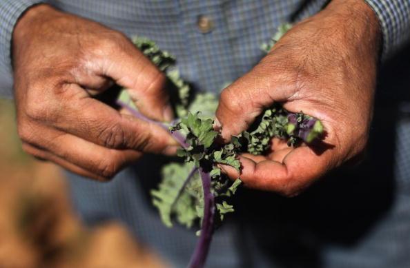Farm「Migrant Workers Employed On Colorado's Largest Organic Farm」:写真・画像(13)[壁紙.com]