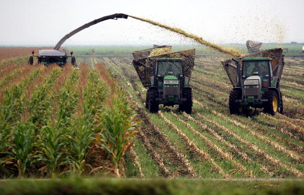 Sugar Cane「Lake Okeechobee water level drops to historic low」:写真・画像(2)[壁紙.com]