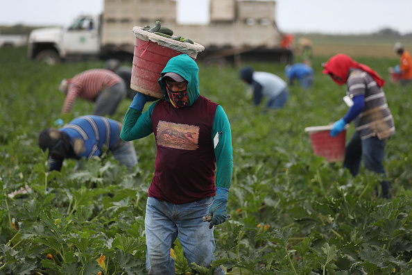 Agriculture「Essential Farm Workers Continue Work As Florida Agriculture Industry Struggles During Coronavirus Pandemic」:写真・画像(5)[壁紙.com]
