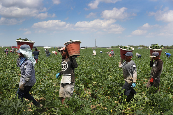 Essential Services「Essential Farm Workers Continue Work As Florida Agriculture Industry Struggles During Coronavirus Pandemic」:写真・画像(5)[壁紙.com]