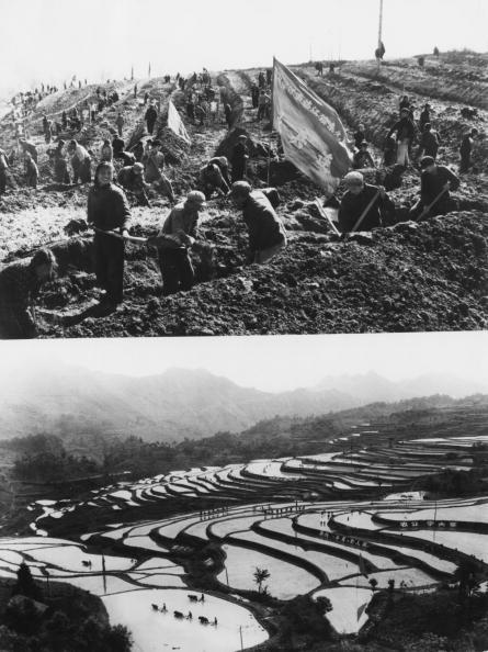 Farm「Chinese Rice Farming」:写真・画像(1)[壁紙.com]
