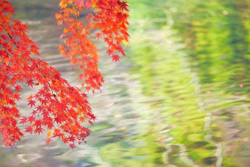 秋+京都「Japanese maple in autumn, Kyoto Prefecture, Honshu, Japan」:スマホ壁紙(0)