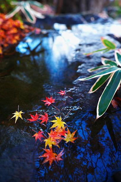 Japanese maple leaves on a rock:スマホ壁紙(壁紙.com)