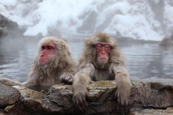 Horizontal「Japanese Macaques Bathe In Hot Springs」:写真・画像(0)[壁紙.com]