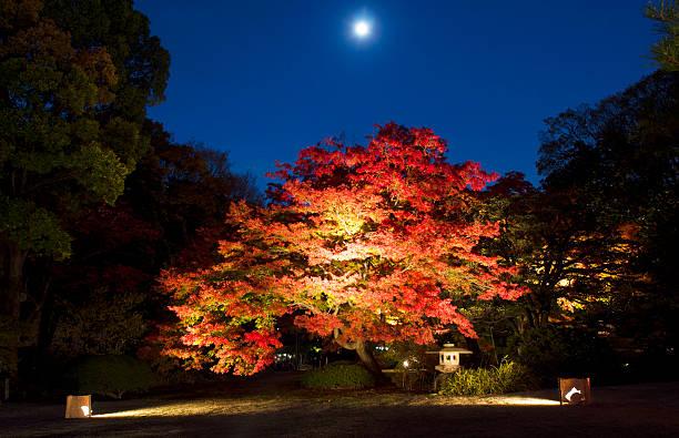 Japanese maple tree in full moon night:スマホ壁紙(壁紙.com)