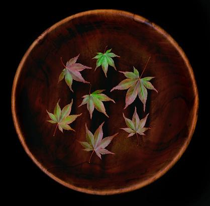 紅葉「Japanese maple (Acer palmatum) leaves in bowl」:スマホ壁紙(0)