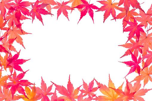 Japanese Maple「Japanese maple leaves」:スマホ壁紙(5)