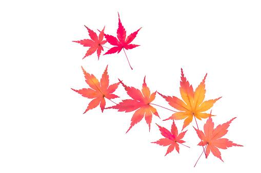 Japanese Maple「Japanese maple leaves」:スマホ壁紙(4)