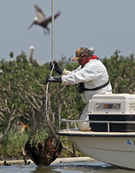 Slippery「Gulf Oil Spill Spreads, Damaging Economies, Nature, And Way Of Life」:写真・画像(3)[壁紙.com]