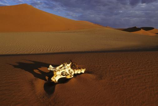 Gemsbok「gemsbok skull in namib desert landscape」:スマホ壁紙(12)