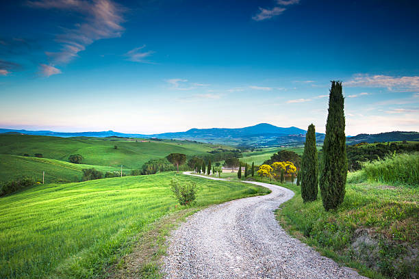 Road to the beauty Tuscany:スマホ壁紙(壁紙.com)
