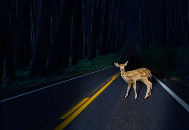 Deer caught in headlights on rural road:スマホ壁紙(壁紙.com)