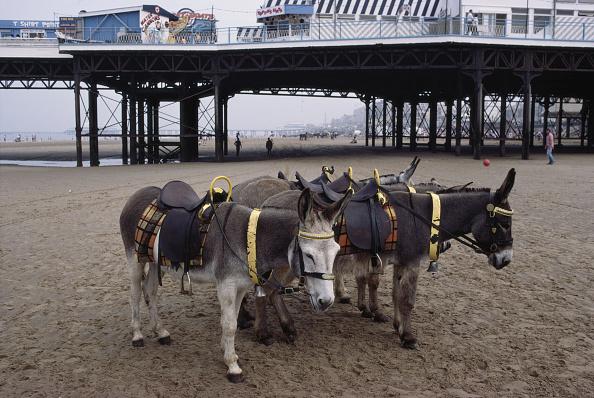 Paying「Donkey Rides」:写真・画像(16)[壁紙.com]