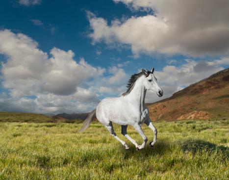 Horse「Galloping white  horse」:スマホ壁紙(19)