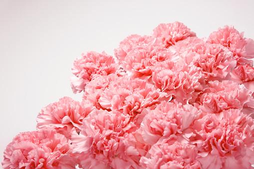 カーネーション「Pink Carnations」:スマホ壁紙(18)