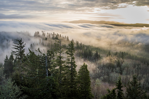 Fog「Fog and forest seen from Coxcomb Hill」:スマホ壁紙(14)