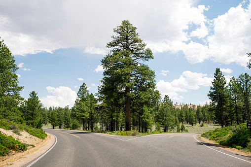 National Park「USA, Utah, Empty forked road in Bryce Canyon National Park」:スマホ壁紙(2)