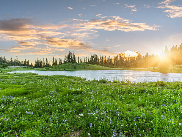Tipsoo Lake of MT.Rainier:スマホ壁紙(壁紙.com)