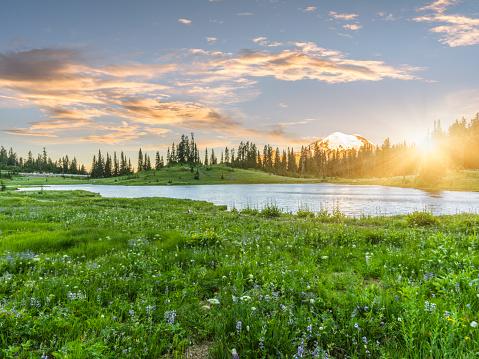 Meadow「Tipsoo Lake of MT.Rainier」:スマホ壁紙(18)