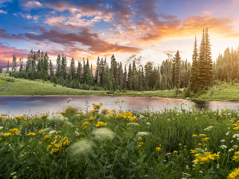 National Park「Tipsoo Lake of MT.Rainier」:スマホ壁紙(10)