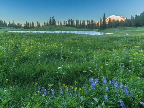 レーニア山国立公園「Tipsoo MT.Rainier 湖」:スマホ壁紙(5)